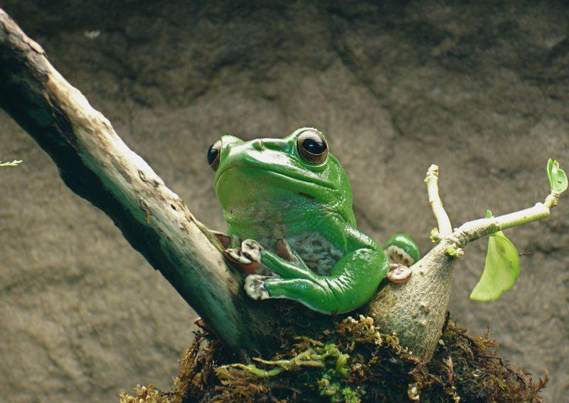 catherine.faust // Baltimore Aquarium Frog